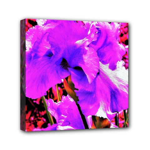 Abstract Ultra Violet Purple Iris On Red And Pink Mini Canvas 6  X 6  (stretched)