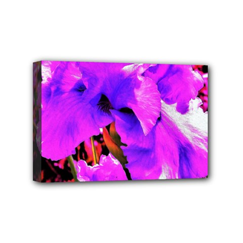 Abstract Ultra Violet Purple Iris On Red And Pink Mini Canvas 6  X 4  (stretched)