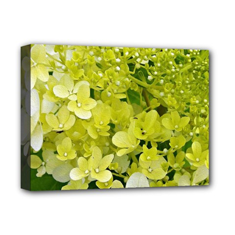 Elegant Chartreuse Green Limelight Hydrangea Macro Deluxe Canvas 16  X 12  (stretched)