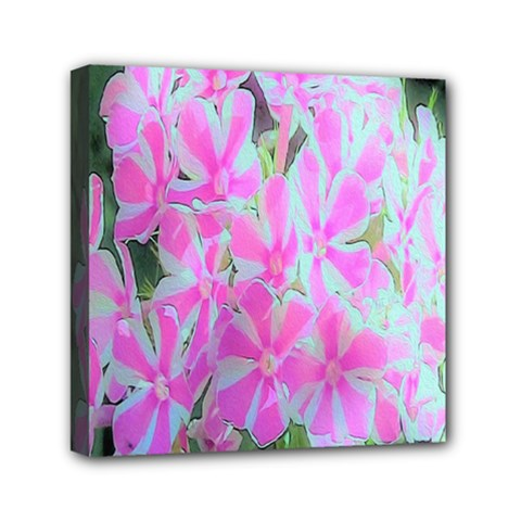 Hot Pink And White Peppermint Twist Garden Phlox Mini Canvas 6  X 6  (stretched)