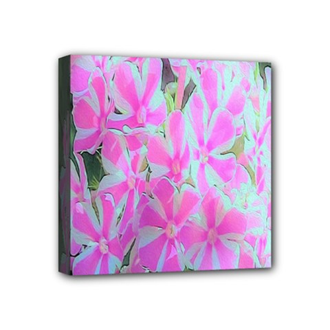 Hot Pink And White Peppermint Twist Garden Phlox Mini Canvas 4  X 4  (stretched)