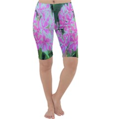 Hot Pink And White Peppermint Twist Garden Phlox Cropped Leggings