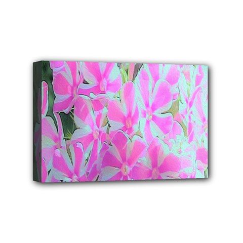 Hot Pink And White Peppermint Twist Garden Phlox Mini Canvas 6  X 4  (stretched)