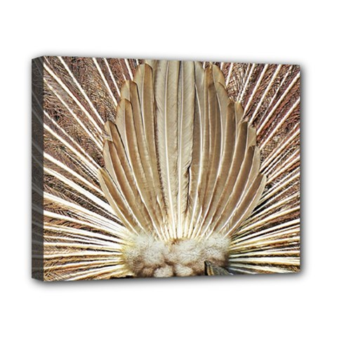 Peacock Wheel Bird Nature Canvas 10  X 8  (stretched)