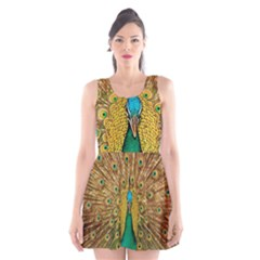 Peacock Feather Bird Peafowl Scoop Neck Skater Dress