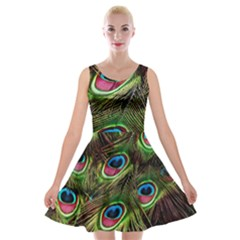 Peacock Feathers Feather Color Velvet Skater Dress