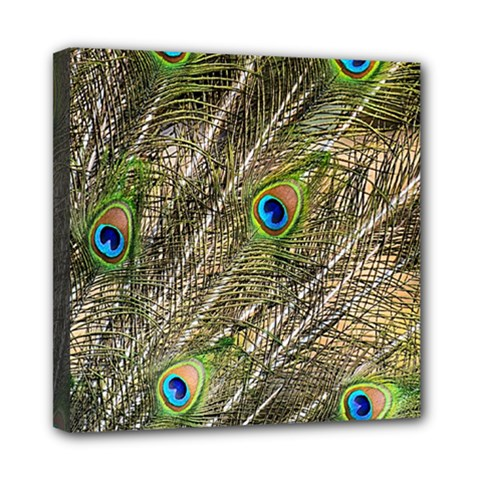 Peacock Feathers Color Plumag Mini Canvas 8  X 8  (stretched)