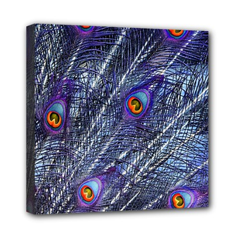 Peacock Feathers Color Plumage Mini Canvas 8  X 8  (stretched)