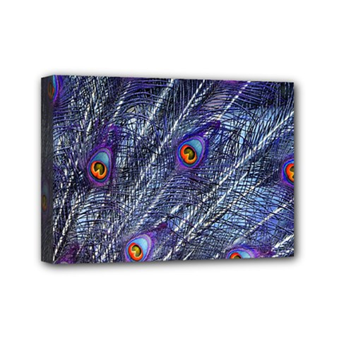 Peacock Feathers Color Plumage Mini Canvas 7  X 5  (stretched)