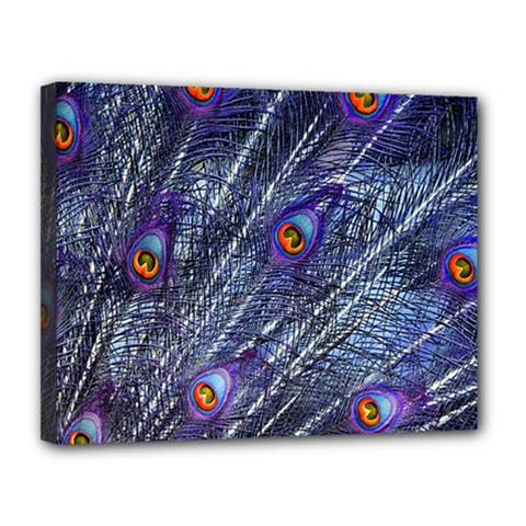 Peacock Feathers Color Plumage Canvas 14  X 11  (stretched)