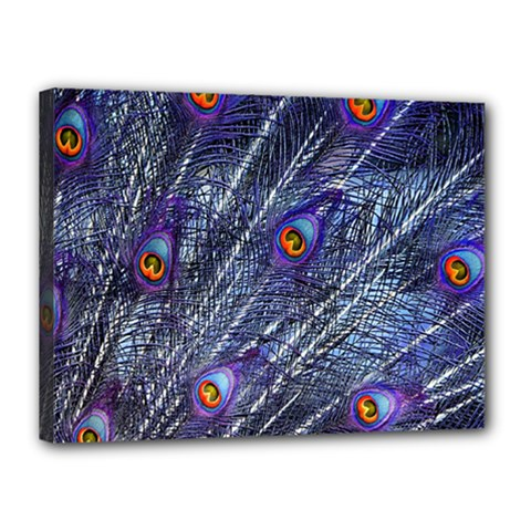 Peacock Feathers Color Plumage Canvas 16  X 12  (stretched)