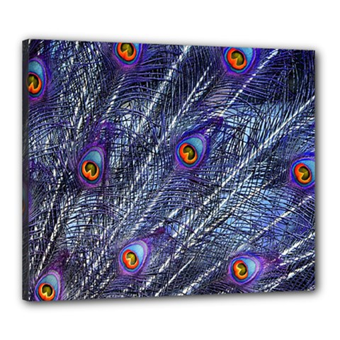 Peacock Feathers Color Plumage Canvas 24  X 20  (stretched)