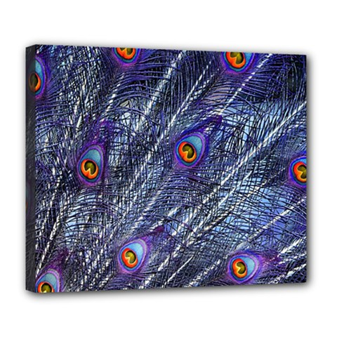 Peacock Feathers Color Plumage Deluxe Canvas 24  X 20  (stretched)