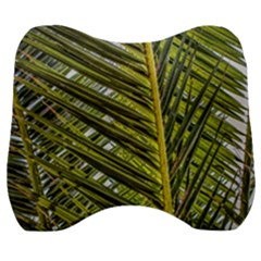 Palm Fronds Palm Palm Leaf Plant Velour Head Support Cushion
