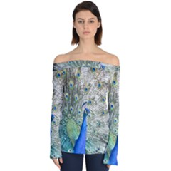 Peacock Bird Colorful Plumage Off Shoulder Long Sleeve Top