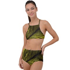 Feather Macro Bird Plumage Nature High Waist Tankini Set