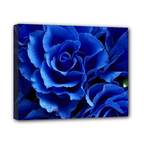 Blue Roses Flowers Plant Romance Canvas 10  X 8  (stretched)