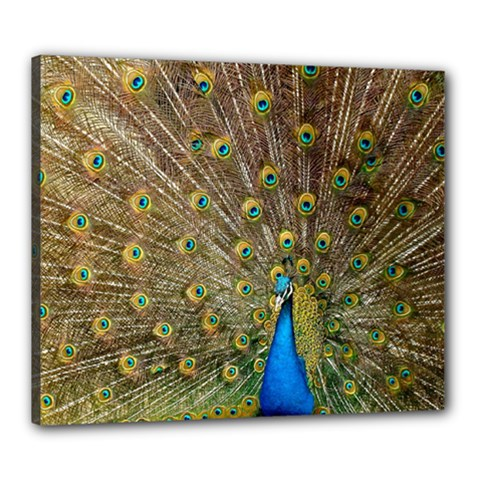 Peacock Plumage Bird Peafowl Canvas 24  X 20  (stretched)