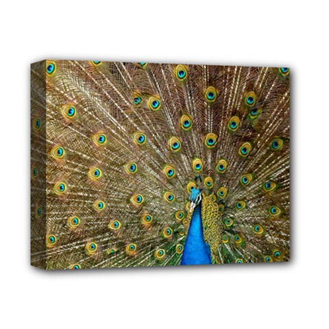 Peacock Plumage Bird Peafowl Deluxe Canvas 14  X 11  (stretched)