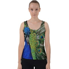 Peacock Close Up Plumage Bird Head Velvet Tank Top