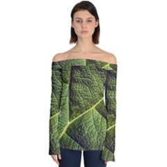 Green Leaf Giant Rhubarb Mammoth Sheet Off Shoulder Long Sleeve Top