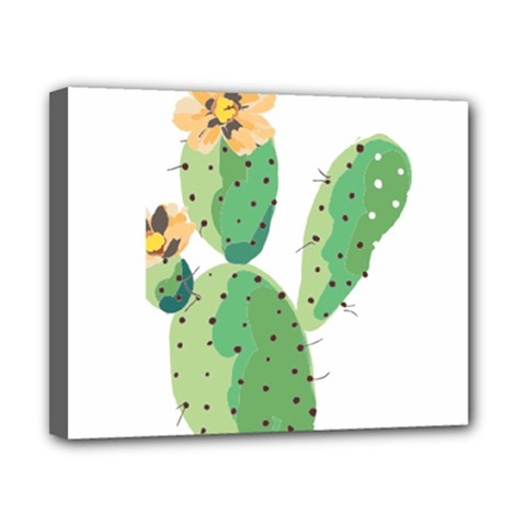 Cactaceae Thorns Spines Prickles Canvas 10  X 8  (stretched)