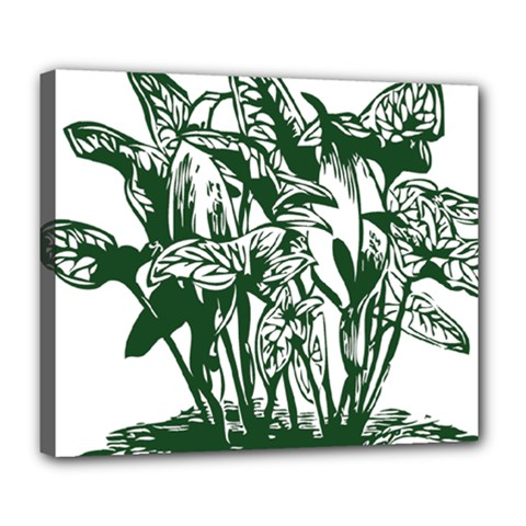 Plant Tropical Leaf Colocasia Deluxe Canvas 24  X 20  (stretched)