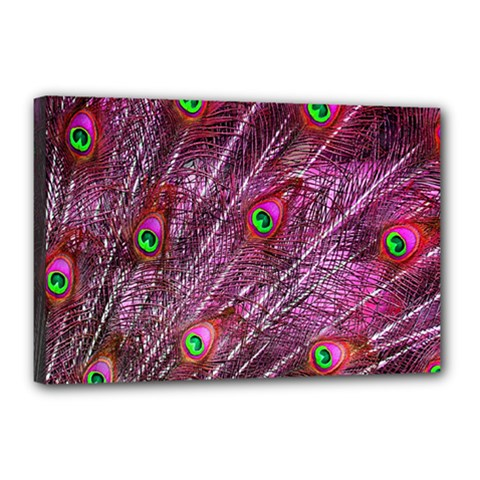 Red Peacock Feathers Color Plumage Canvas 18  X 12  (stretched)