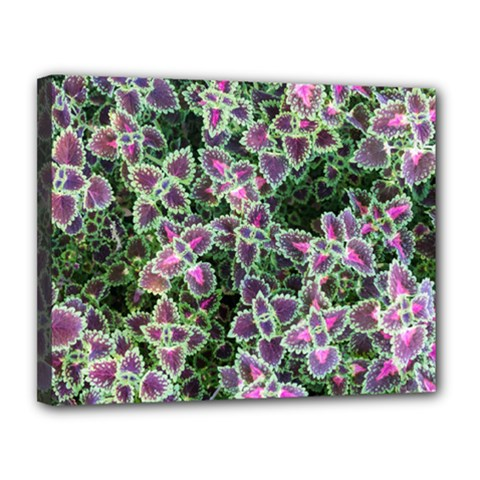 Ivy Lace Flower Flora Garden Canvas 14  X 11  (stretched)