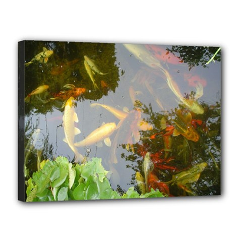 Koi Fish Pond Canvas 16  X 12  (stretched)