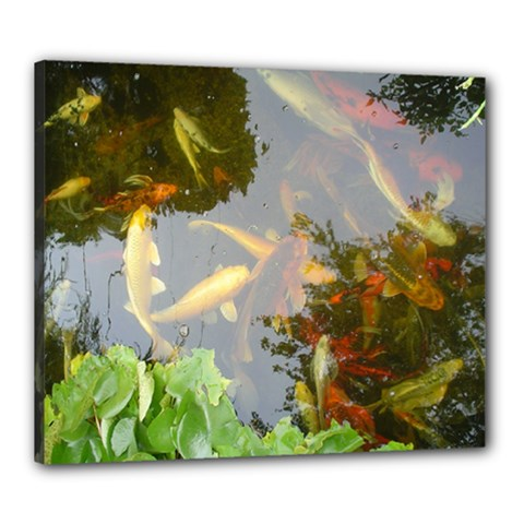 Koi Fish Pond Canvas 24  X 20  (stretched)