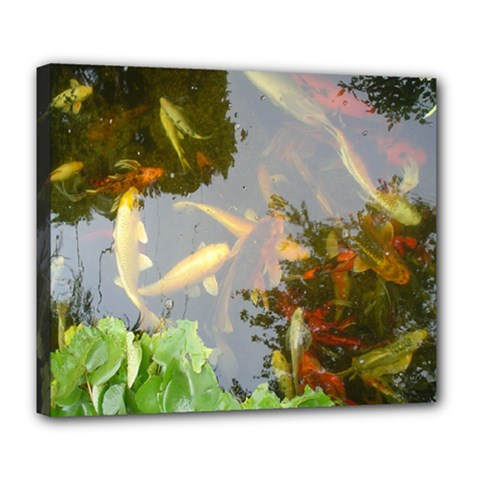 Koi Fish Pond Deluxe Canvas 24  X 20  (stretched)