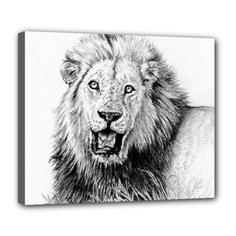 Lion Wildlife Art And Illustration Pencil Deluxe Canvas 24  X 20  (stretched)