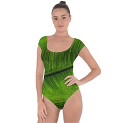Green Leaf Plant Freshness Color Short Sleeve Leotard