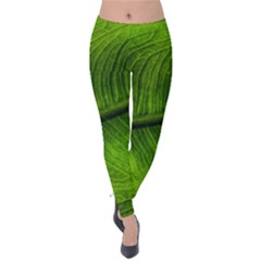 Green Leaf Plant Freshness Color Velvet Leggings