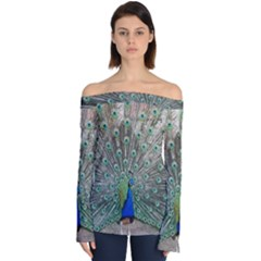 Peacock Bird Animal Feather Off Shoulder Long Sleeve Top by Pakrebo