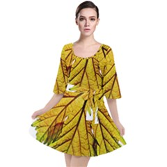 Leaf Grape Vine Sunlight Garden Velour Kimono Dress
