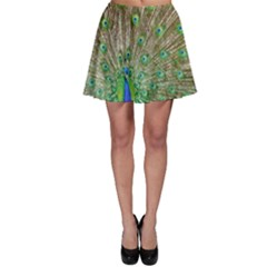 Peacock Color Bird Colorful Skater Skirt by Pakrebo