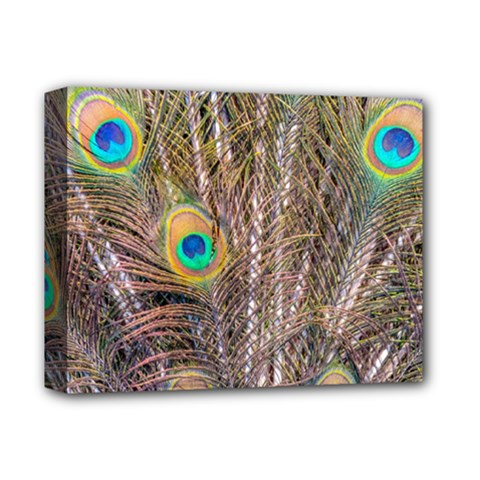 Pen Peacock Wheel Plumage Colorful Deluxe Canvas 14  X 11  (stretched)