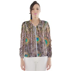 Pen Peacock Wheel Plumage Colorful Women s Windbreaker