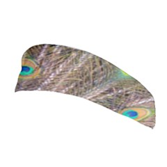 Pen Peacock Wheel Plumage Colorful Stretchable Headband