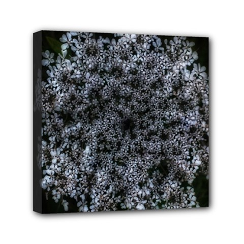 Queen Annes Lace In White Mini Canvas 6  X 6  (stretched)