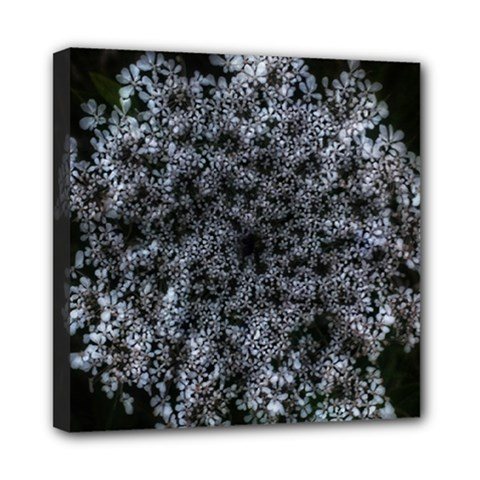 Queen Annes Lace In White Mini Canvas 8  X 8  (stretched)