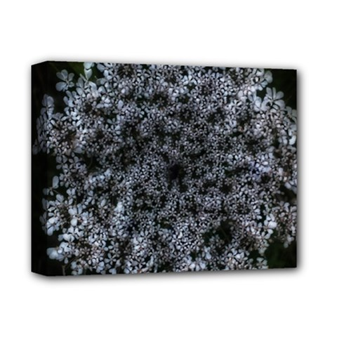 Queen Annes Lace In White Deluxe Canvas 14  X 11  (stretched)