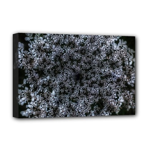 Queen Annes Lace In White Deluxe Canvas 18  X 12  (stretched) by okhismakingart