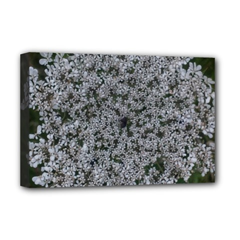 Queen Annes Lace Original Deluxe Canvas 18  X 12  (stretched)