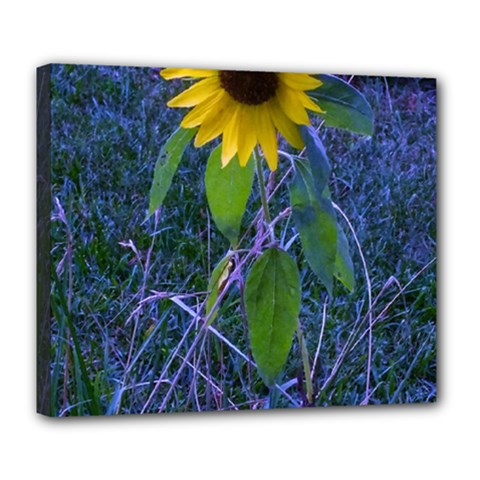 Blue Sunflower Deluxe Canvas 24  X 20  (stretched)