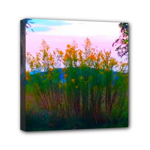 Field Of Goldenrod Mini Canvas 6  X 6  (stretched)