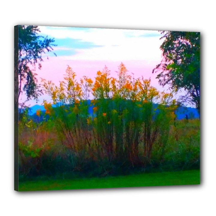 Field of Goldenrod Canvas 24  x 20  (Stretched)