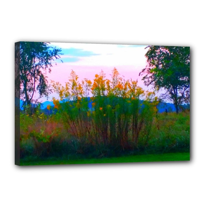 Field of Goldenrod Canvas 18  x 12  (Stretched)